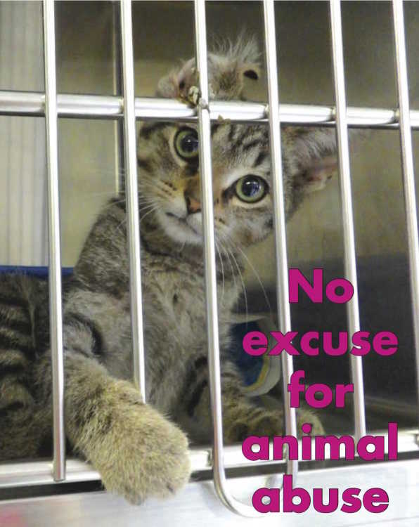 Stricter animal abuse laws begin July 1