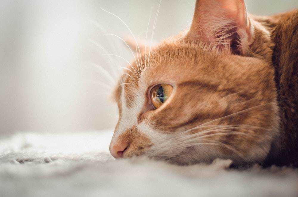 Attention cat owners: Deadly cat virus confirmed in area