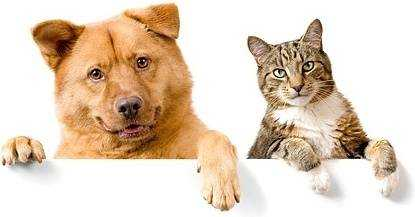 Make your home pet friendly
